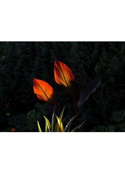 Listy v noci - Jiří Fučikovský